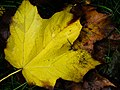 Fall Layers (1532641668).jpg