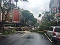 Fallen Tree Barried Xindong Street, Taipei 20160928.jpg