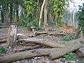 Fallen trees - geograph.org.uk - 1240922.jpg
