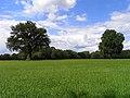 Farmland, Baughurst - geograph.org.uk - 1345718.jpg