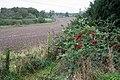 Farmland near Ellistown - geograph.org.uk - 265917.jpg
