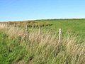 Field above Gilsland - geograph.org.uk - 241592.jpg