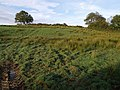 Field near Waterhouse - geograph.org.uk - 581313.jpg