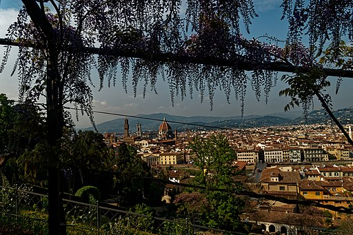 Florence, Giardino Bardini, flowering wisteria and view north on Torre di Arnolfo and the Duomo