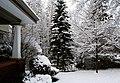 First Snow of the Season (297245677).jpg