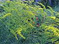 Fleurs 6.jpg