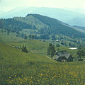 Flickr - Ion Chibzii - Ridge of Svidovets, Bucovina. 80th years..jpg