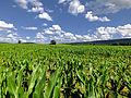 Flickr - Nicholas T - Buffalo Valley (3).jpg
