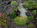 Flickr - brewbooks - Rock garden - green stream.jpg