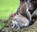 Flickr - law keven - I need more Nuts.....jpg