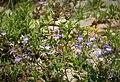 Flora (11a) (43118282770).jpg
