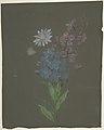 Floral Design MET DP805171.jpg