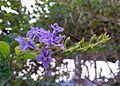 Flower1239.jpg