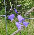 Flower (27385459074).jpg