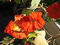 Flower 49 (6844589906).jpg