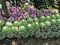 Flowers in Yangmingshan Park 02.jpg