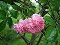 Flowers of Usti nad Orlici.jpg