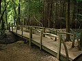 Footbridge, Newpark Plantation - geograph.org.uk - 872937.jpg