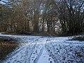 Footpath junction in Pastead Wood - geograph.org.uk - 1118302.jpg