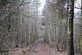 Footpath through Little Crabden Wood (2) - geograph.org.uk - 1726796.jpg