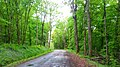 Forêt, vers Montaigne - panoramio.jpg