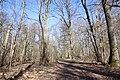 Forêt Départementale de Beauplan à Saint-Rémy-lès-Chevreuse le 14 mars 2018 - 03.jpg