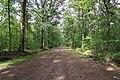 Forêt domaniale de Bois-d'Arcy 33.jpg