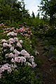 Forest-trail-spring-flowers - West Virginia - ForestWander.jpg