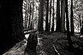 Forest (23410106450).jpg
