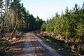 Forest Road - geograph.org.uk - 294144.jpg