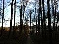 Forest Rumpelhöchi - panoramio.jpg