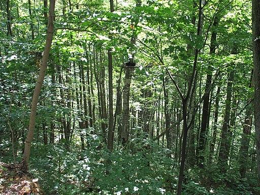 Forest in Sigulda Latvia
