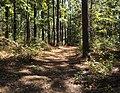 Forest near Little Black Creek Water Park (10-2012) - panoramio.jpg