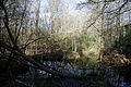 Forest pond at Gernon Bushes Nature Reserve, Coopersale Essex England 3.jpg