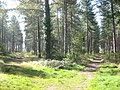 Fork in the path^ - geograph.org.uk - 995403.jpg