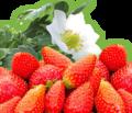 Fraises + fleur fraisier.png