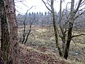 From the old railway line - March 2013 - panoramio.jpg