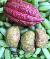 Fruit of Srilanka.jpg
