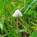 Fungi (30289323011).jpg