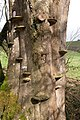 Fungi on a tree in the Hollocombe valley - geograph.org.uk - 147974.jpg
