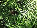 Gardenology.org-IMG 0868 rbgs10dec.jpg