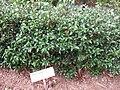 Gardenology.org-IMG 2283 rbgs11jan.jpg