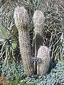 Gardenology.org-IMG 2320 hunt0903.jpg