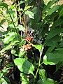 Gardenology.org-IMG 7411 qsbg11mar.jpg