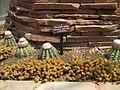 Gardenology.org-IMG 7468 qsbg11mar.jpg