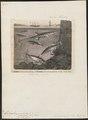 Gasterosteus aculeatus - - Print - Iconographia Zoologica - Special Collections University of Amsterdam - UBA01 IZ12900001.tif