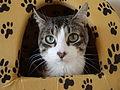 Gato-Panchito.jpg