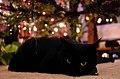 Gift Kitty (5242949144).jpg