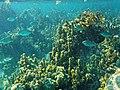 Glover's Reef 2-14 (33297597845).jpg