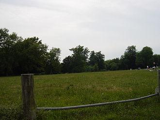 Goodwood Country Park - Goodwood Country Park grass area